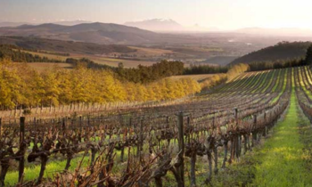 South Africa's Top 5 Historic Wine Estates