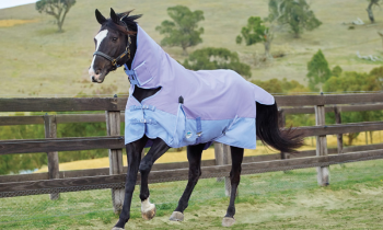 Why You Should Prepare Your Horse For The Winter?